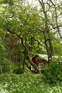Mökki puiden siimeksessä